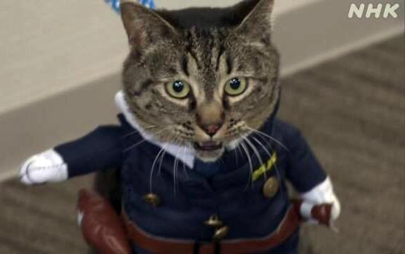 """""""โคโคะจัง"""" แมวเมืองโทยามะช่วยชีวิตคน ได้รับการแต่งตั้งเป็นหัวหน้าตำรวจ 1 วัน"""